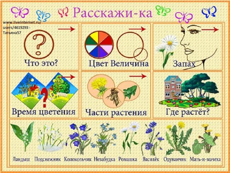 Цветы жизни 1 рассказы 12 фотография